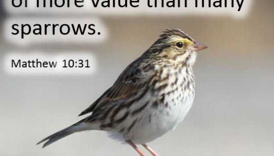 Matthew 10:31 Fear Not therefore; you are of more value than many sparrows