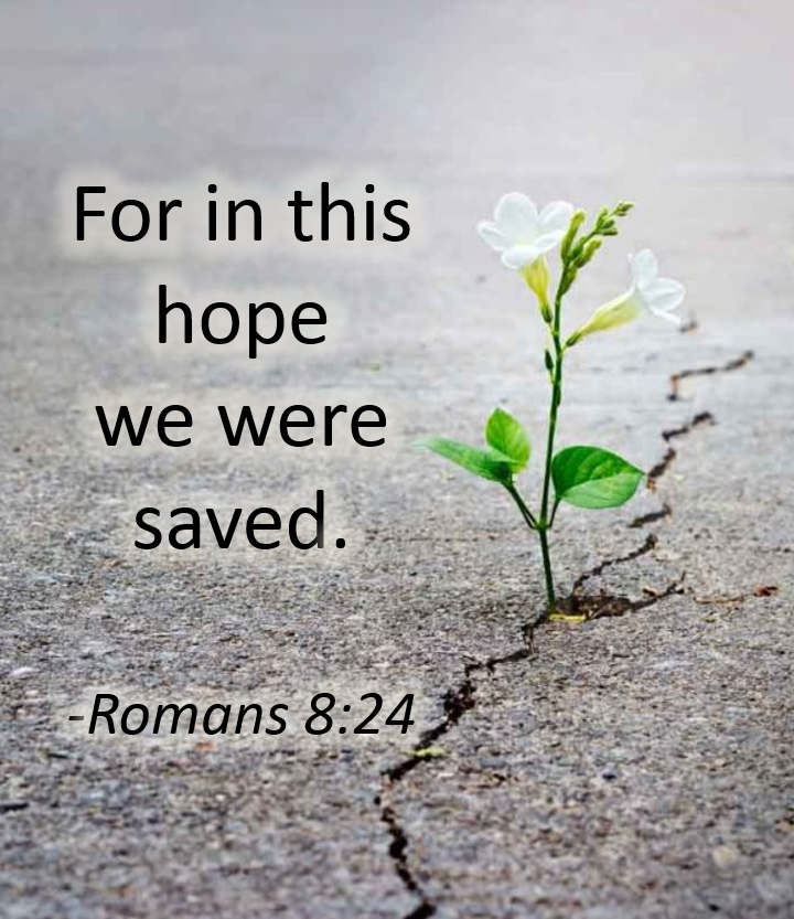 For in this Hope we are Saved Romans 8:18-27